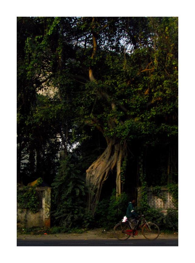 Calcutta, November 2019