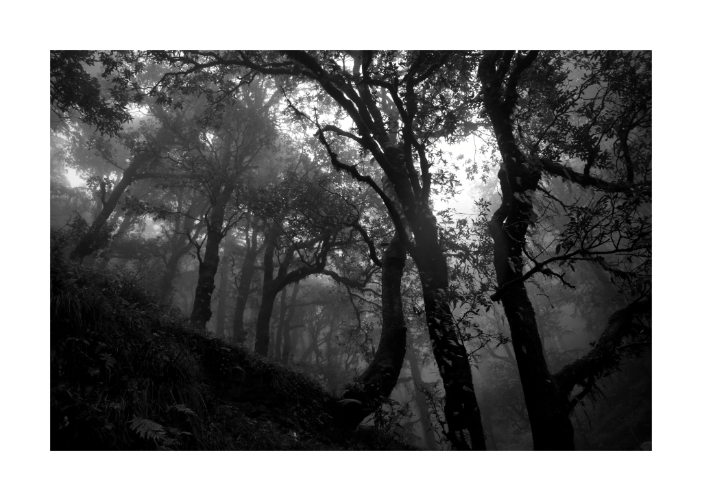 The Witches' Grove